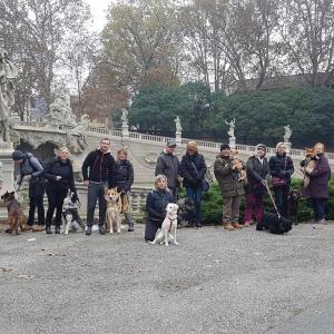 Stefan Ghiuta Dog Walking Educativo